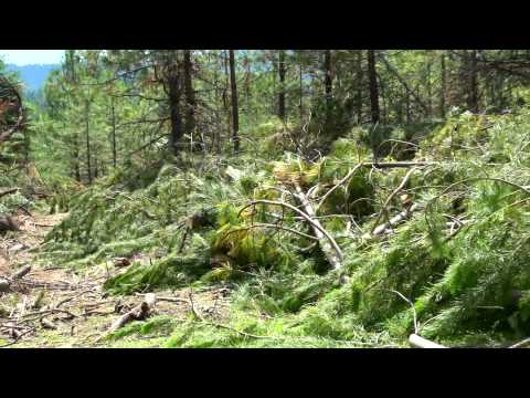 Biomass Research on the University of Idaho Experimental Forest 1080p