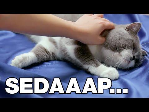 BSN Kucing Happy