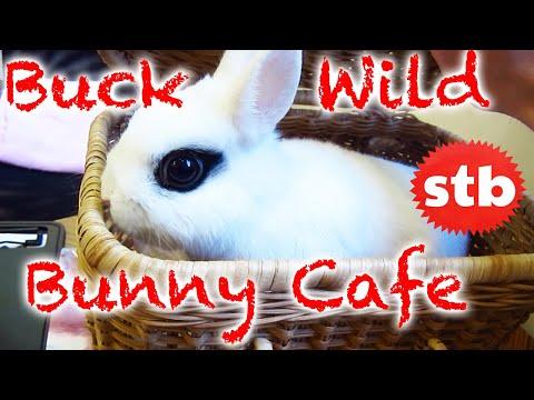 Bunny Rabbit Cafe In Japan ★ Solotravelblog video