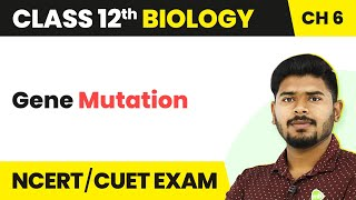 Gene Mutation | Molecular Basis of Inheritance | Class 12th | Biology | In Hindi | Magnet Brains