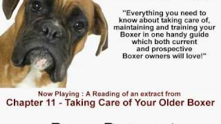 Your older Boxer Dog - Old Age Boxer Dog Care Tips