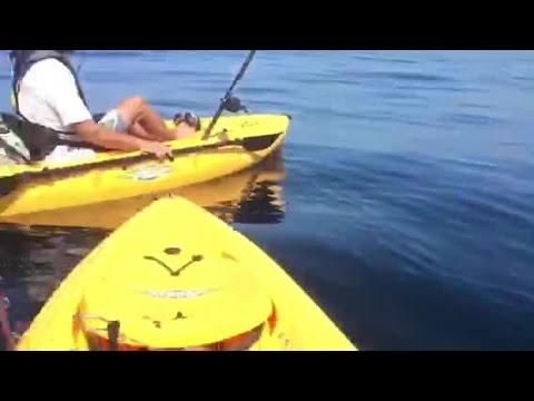 Hammerhead shark sighting off the coast of La Jolla