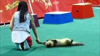 Ultimutts Cat Trick Performance ft  Cat from Pet Sematary