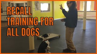 Recall Training for All Dogs How To Dog Training
