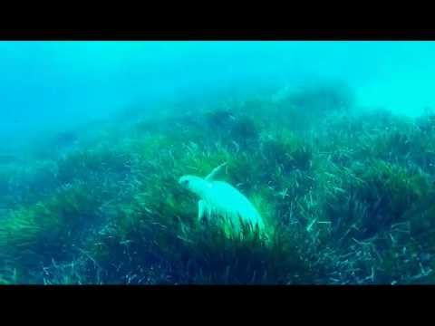 видео рыбалки на крите