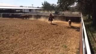 Autumn- Jared Lesh cowhorses