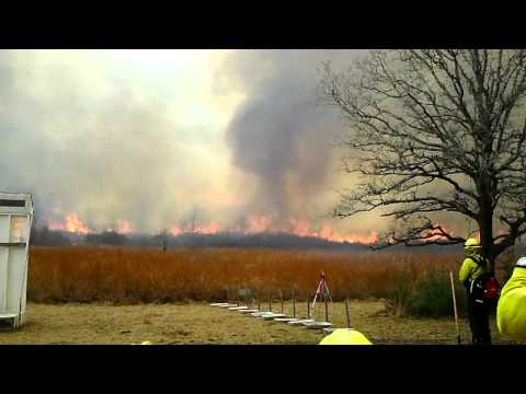 Prescribed Wildland Fire near Bastrop, TX