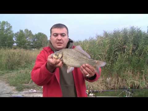 Семейная рыбалка на реке Самара(Днепр)Неизданное 4(Дневник рыболова)