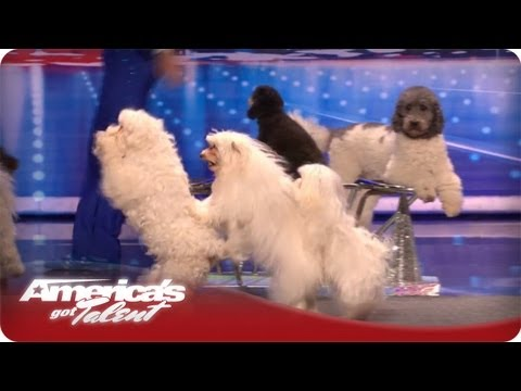 Jump-Roping Dog - Olate Dogs Audition - America's Got Talent