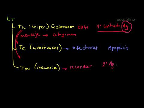 El sistema inmunológico - Biología - Educatina