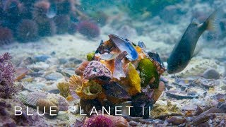 FISRT TIME ON CAMERA: Octopus disguises itself in shell suit - Blue Planet II: Episode 5 - BBC One