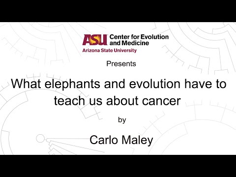 What elephants and evolution have to teach us about cancer | Carlo Maley | CEM