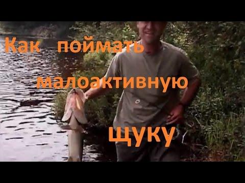 диалоги о рыбалке окунь щука