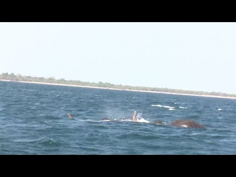 Two Elephant's Rescued From Middle Of Sea