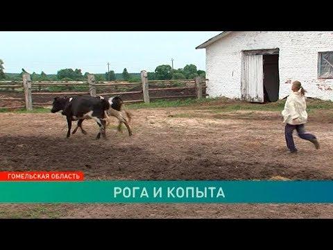 Несанкционированное кладбище животных обнаружено в Гомельской области