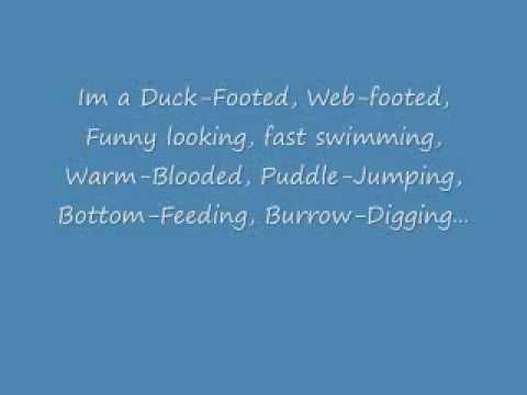 PP-Platypus Song with Lyrics  P P Platypus Song Lyrics