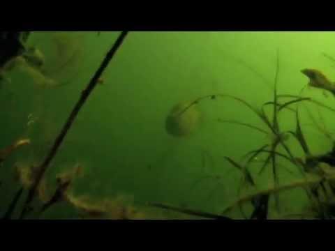 Aqua-Vu Underwater P.O.V.