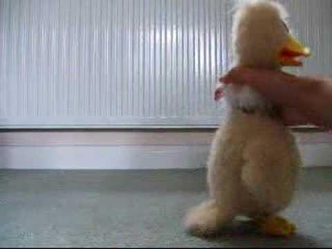 strangled duck!