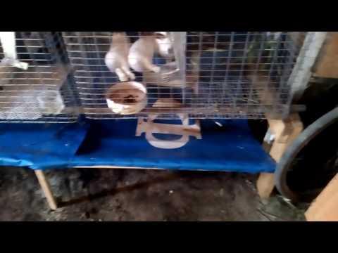 Навозоудаление для кроликов своими руками
