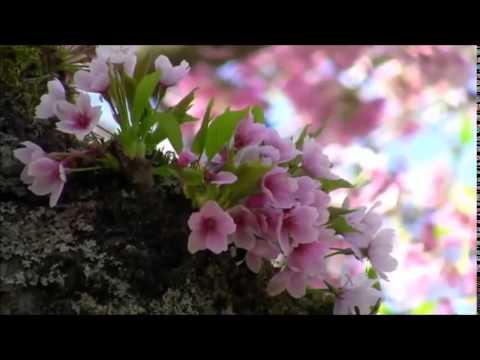 Лист Ференц - Весна (Шопен)