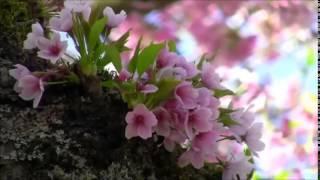 Frédéric Chopin Spring Waltz