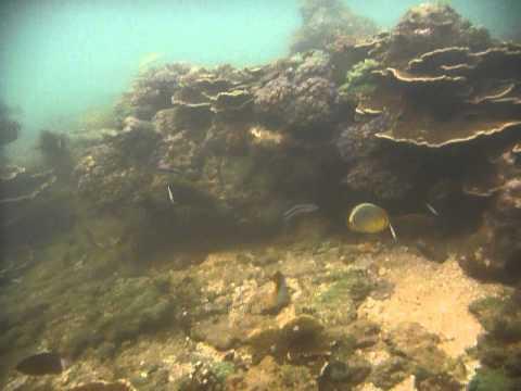 Sri Lanka,ශ්රී ලංකා,Ceylon,Coral Reef (07)