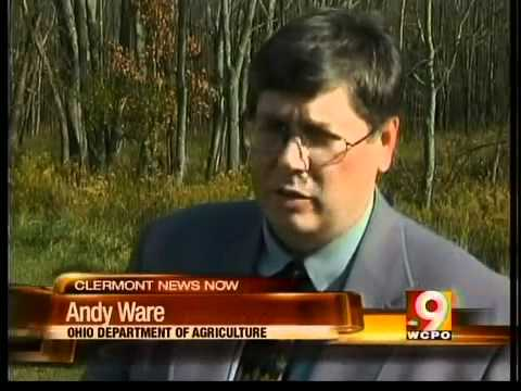 50,000 trees to be chopped in Tate Twp.