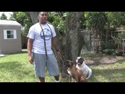 0 Dog Training Tips : How to Stop a Dog From Eating Feces