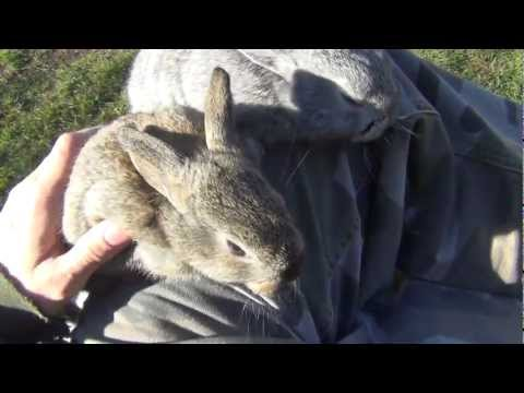 � Super cute baby bunnies � Funny pets, awesome baby animals