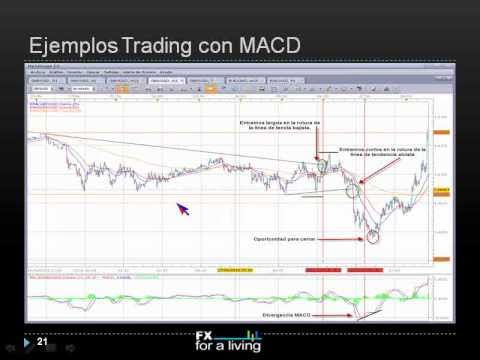 Forex trading offshore company