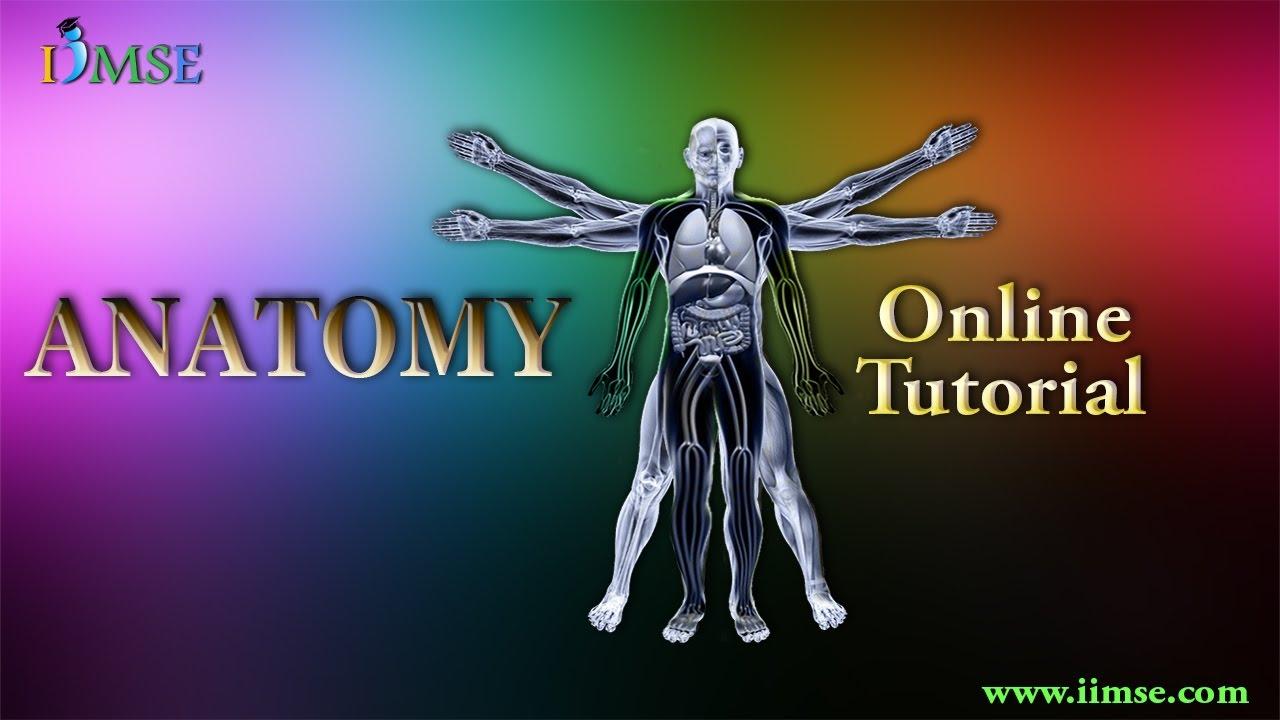 Online anatomy courses