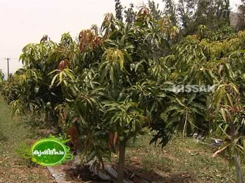 Hi-Tech farming of fruit crops like Mango,Cashew,Pomegranate,Guava,Gooseberry in open field