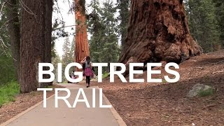 Big Trees Trail Hike - Sequoia National Park - HD June 2016