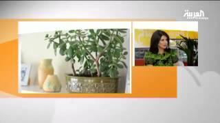 علم الطاقة: أين أفضل مكان للنباتات في البيت؟