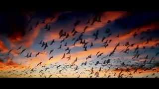 Интересный документальный фильм о смысле жизни