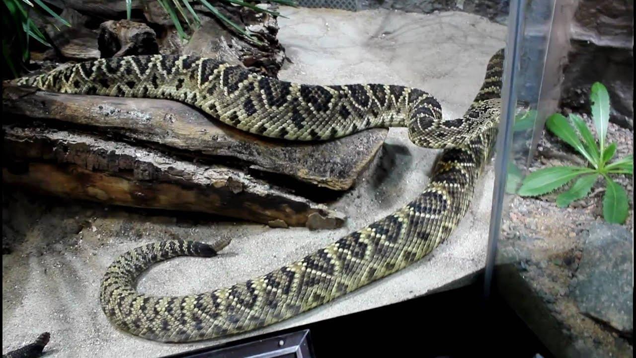 största ormen i världen