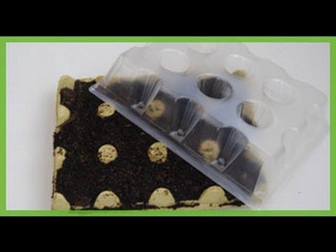C mo hacer semillero con envase de huevos mini - Envases de huevos ...