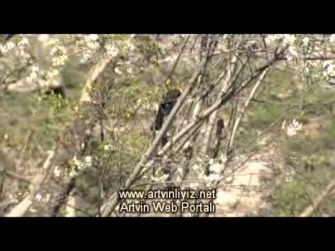 ''Cennetten Bir Köşe Artvin'' Belgeseli Video | www.artvinliyiz.net