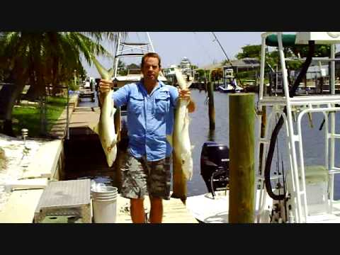 Shark Fishing in Tampa Bay, Florida