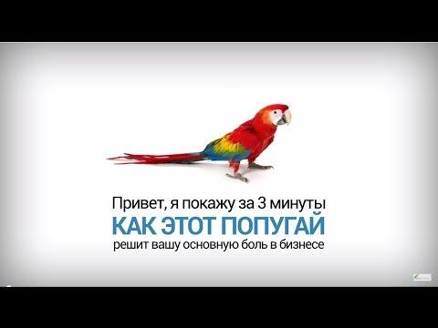 SEO для бизнеса. Павел Шульга (Академия SEO)