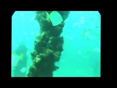 Mermaid in Great Barrier Reef!!