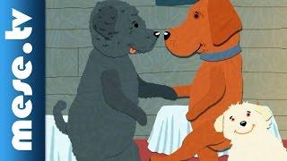 Kalap Jakab: Kutyabál (gyerekdal, animáció, puli)