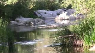 Watch Melissa Etheridge Only Love video