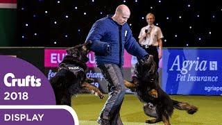 West Midlands Police Dog Display   Crufts 2018
