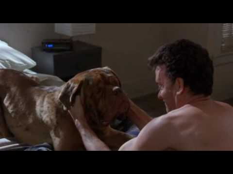 Turner & Hooch is listed (or ranked) 38 on the list Movies Distributed by Buena Vista