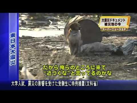 Cães esperam socorro após tsunami no Japão
