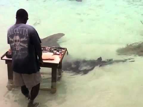 girl (5) swims with sharks