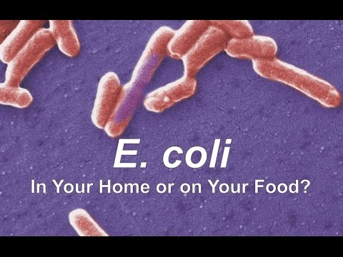 2011 Germany E coli O104H4 outbreak  Wikipedia