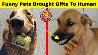 Hilarious Treasures Pet Owners Received From Their Pets