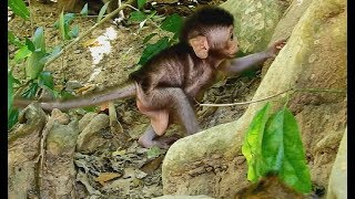 Oh Oh! Very good, What happen when newborn baby monkey try leaning climb up without mom